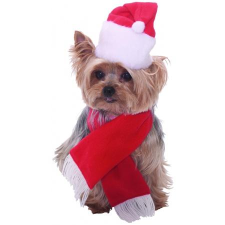 Dog Santa Costume image
