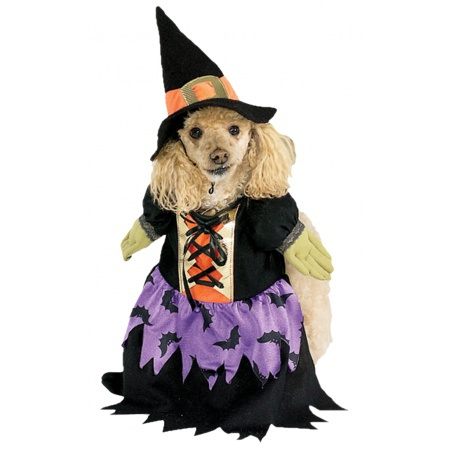 Witch Dog Costume image
