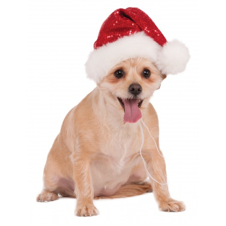 Santa Hat For Dogs image