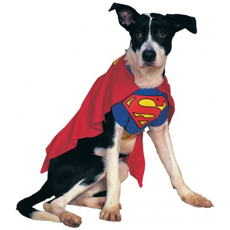 Superman Dog Costume image